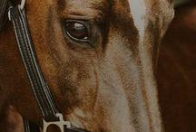 Лошади чудесные