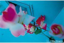 Picture/Art...etc