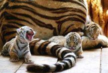 Animales Hermosos / by Minda Khan