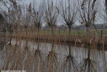 polder rondom Bleskensgraaf / over de natuur rondom Bleskensgraaf