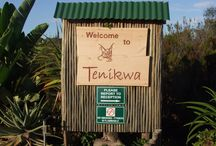 Tenikwa Wildlife Awareness and Rehabilitation Centre Program / Scenes and views from Volunteer World Internationals amazing volunteer experience at Tenikwa - right at the heart of South Africas beautiful Garden Route!
