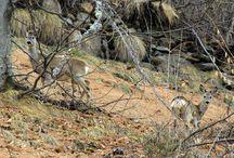 Wildlife in Valsesia / Foto scattate a fauna e insetti valsesiani