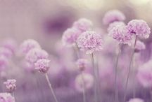 flowers / amazing and pretty pictures oft flowers