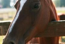 horses / by Ronni Marazas