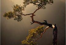 tree on nature