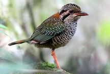 Madagascar Birding and Wildlife