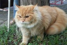 my cat name of Marlilo