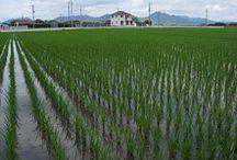 Zdrowy ryż <3