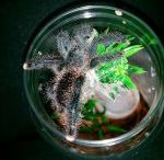 My Tarantula's