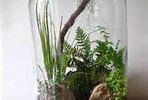 Terrarium Plante Bocal