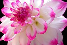 Ref. Flores
