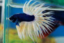 peixes lindos / aquário