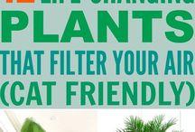 Cats - safe potplants