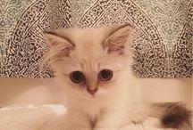 koty kotki❤ kociaki