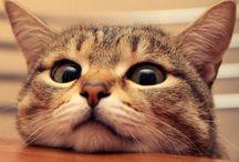 Cat / Kedicikler