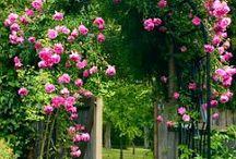 My Garden Dreams!!