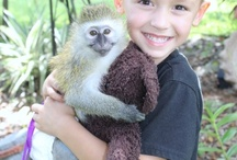 Animal pic / Check out the Animals at Dade City's Wild Things