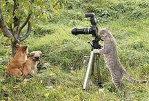 Funny Animals / funny animals