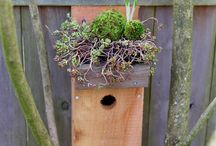 Wood Crafts and Bird Houses