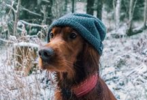 Troja The Dog / Roaming The Norwegian Wilderness With My Companion Troja