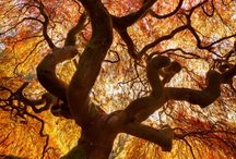 Tremendous Trees / A collection of beautiful trees and ways to include trees in your landscaping!  / by Dreamscape: Yard Product