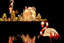 Chinese Lanterns / Chinese Lanterns, Illuminated Art