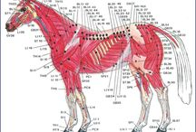 Acupunctura veterinara