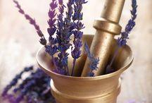Lavender / Lavender soothes restlessness, insomnia, nervousness, and depression
