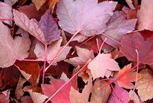 distinto tipo de hojas