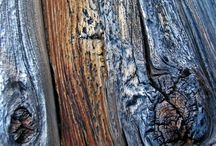Inspiring Nature's Textures / an Exhibit of the abstract art of nature.