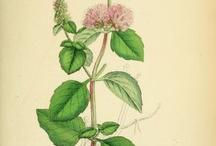 Ботаника / Растения