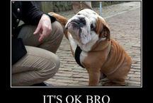 I love Pups!