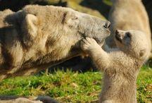 Süße Tiere / animals