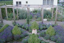 gardening glamour  / by Sarah Cruze