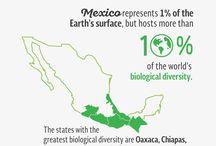 Visit Mexico University