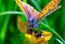 Farfalle & Falene