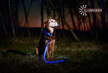 Illumiseen LED dog collar and leash / Keep your pets safe in the dark with our LED dog collar and/or leash. Available in the variety of colours >>  www.amazon.com/gp/shops/Illumiseen