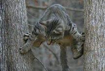 Animals / Climbing animals
