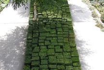 Exterior design - garden