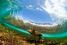 Turtles / by Brandi Edmonds