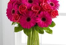 Flores / Arreglos