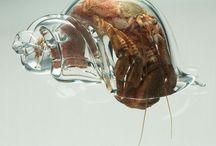 透明の中貝殻