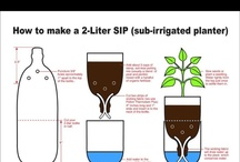 Gardens and Plants / Ideas for gardening and planting