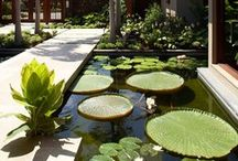 Water Garden and Ponds / Water Garden, Features and Ponds