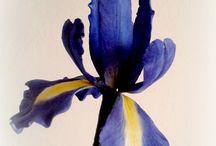gum paste iris