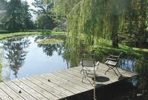Gardens / Ponds