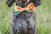 Weddings & dogs
