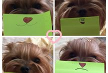 Yorkshire Terrier / Post It Yorkie ))