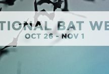 Show Your Bat Love!