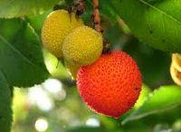 Piante e Frutti / Proprietà e usi